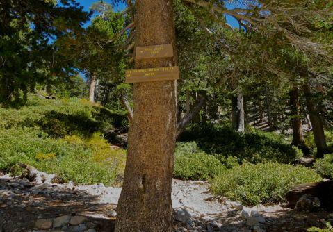 San Gorgonio hike, San G hike, Sunday, gorgeous hike, blue skies, High Creek campground
