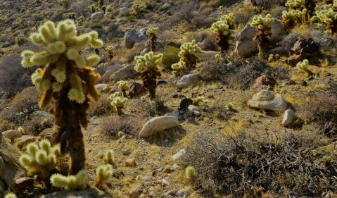 mortero palms trail, goat canyon trestle, anza-borrego desert state park, hike, camping, desert hike, desert, cacti,